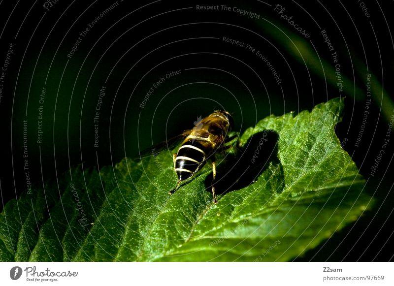 sunbathe Leaf Macro (Extreme close-up) Bee Insect Wasps Beginning Launch pad Green Animal Ready sunshine Close-up Wing Flying Upward Nature fly