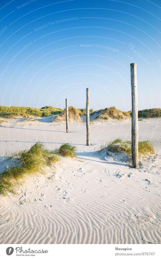 coastal dune Saint Peter-Ording Beach Nature Landscape Sand Cloudless sky Summer Plant Grass Foliage plant Hill Coast Wood Blue Yellow Green duene