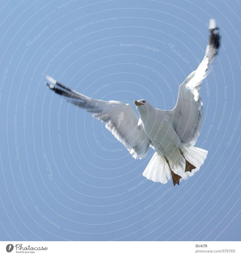 Nature Blue White Ocean Animal Black Cold Life Gray Flying Bird Wild animal Tourism Free Esthetic Trip