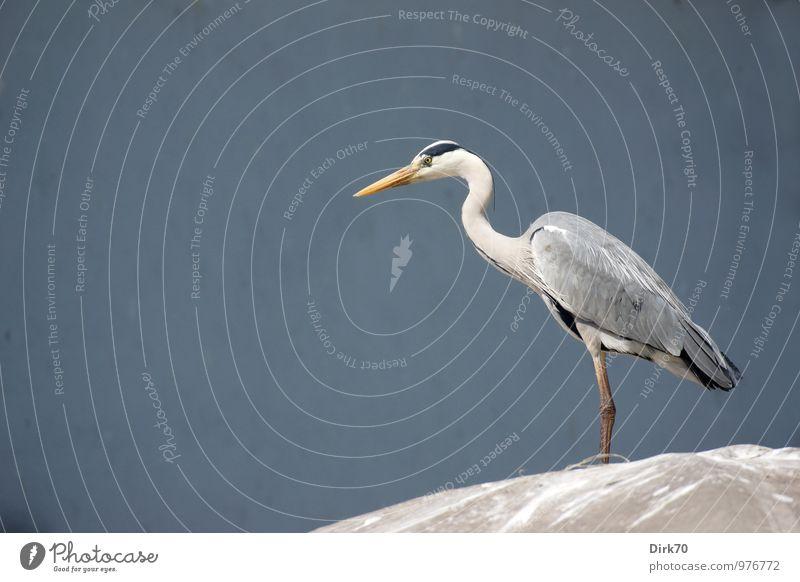 Blue White Calm Animal Black Yellow Spring Gray Bird Elegant Wild animal Stand Wait Beautiful weather Roof Posture