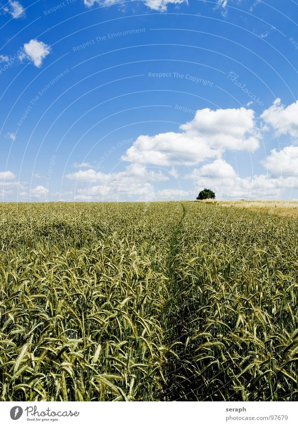 Fields Meadow Rye Wheat Barley Horizon Environmental protection Blade of grass Ear of corn Ecological Cornfield Rural Agriculture Grain Nature Landscape Plant