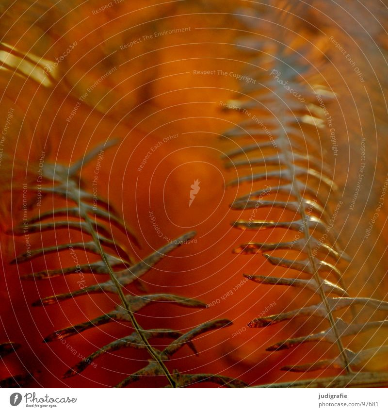 Nature Old Plant Summer Colour Death Life Warmth Autumn Brown Orange Romance Transience Physics Dry Dried