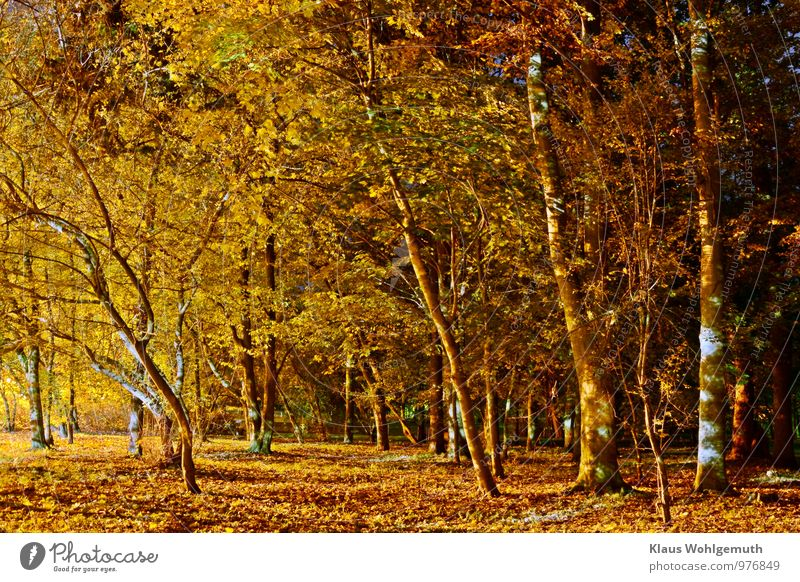"""My inexhaustible park"" ;-) Environment Nature Plant Autumn Tree Leaf Park salow Village Blue Brown Yellow Gold Green Black Colour photo Exterior shot Deserted"