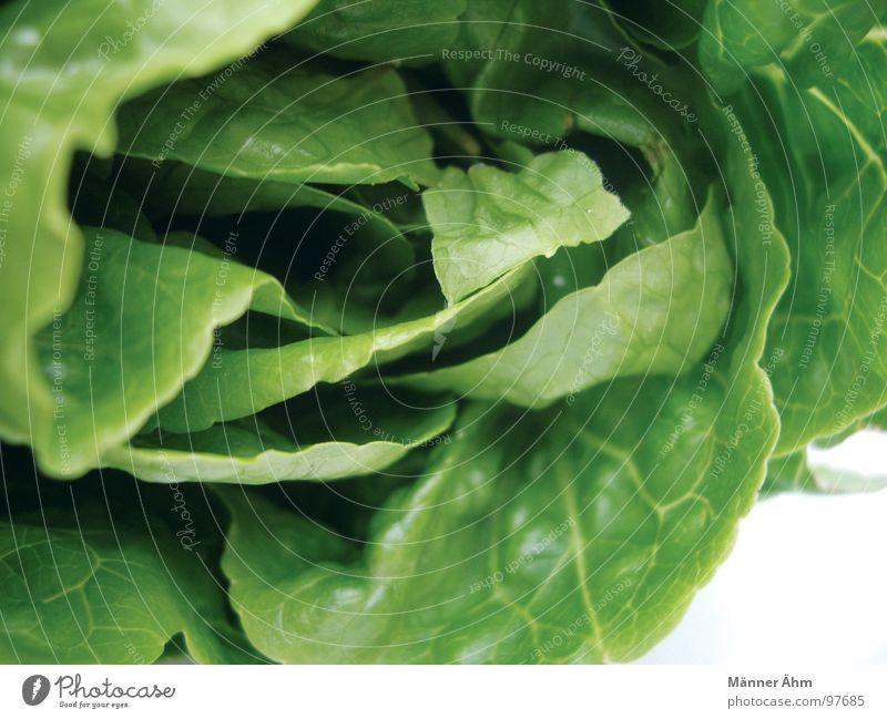 Green garden salad Summer Fresh Dressing Gastronomy Vegetable Vegetarian diet Lettuce Garden Nutrition