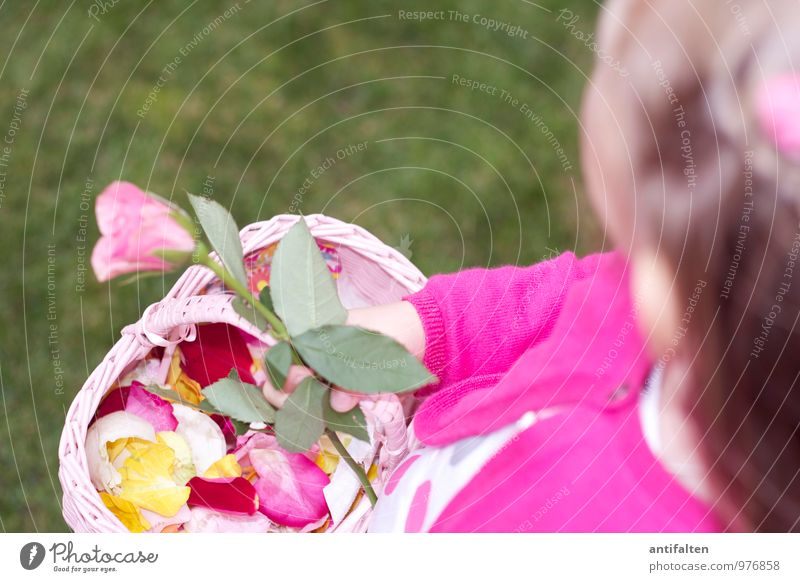 Flower Girl I Wedding Feminine Child Brothers and sisters Family & Relations Infancy Body Head Hair and hairstyles Arm Hand 1 Human being 3 - 8 years Rose