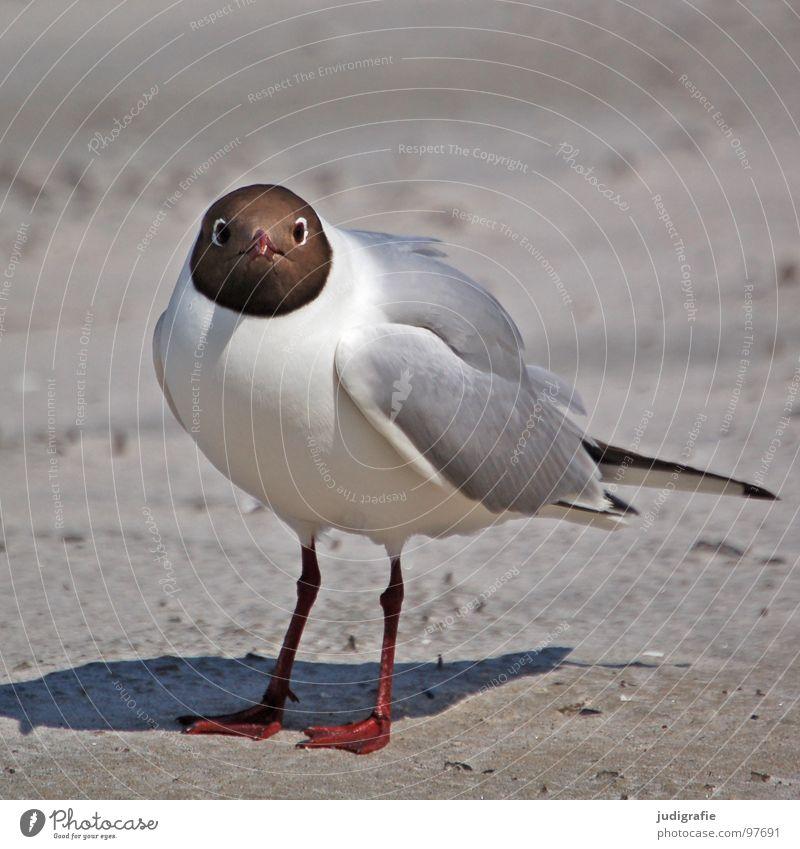 Nature Ocean Summer Beach Vacation & Travel Animal Lake Sand Legs Bird Coast Environment Flying Threat Feather Wing