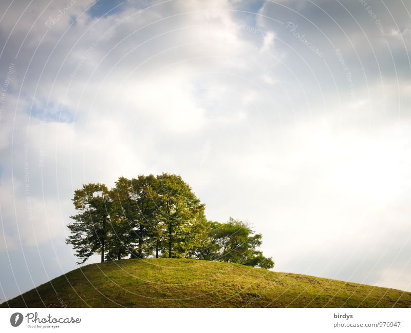 quiet place Nature Sky Clouds Horizon Summer Tree Meadow Hill Esthetic Simple Above Positive Calm Far-off places Island Colour photo Exterior shot Deserted