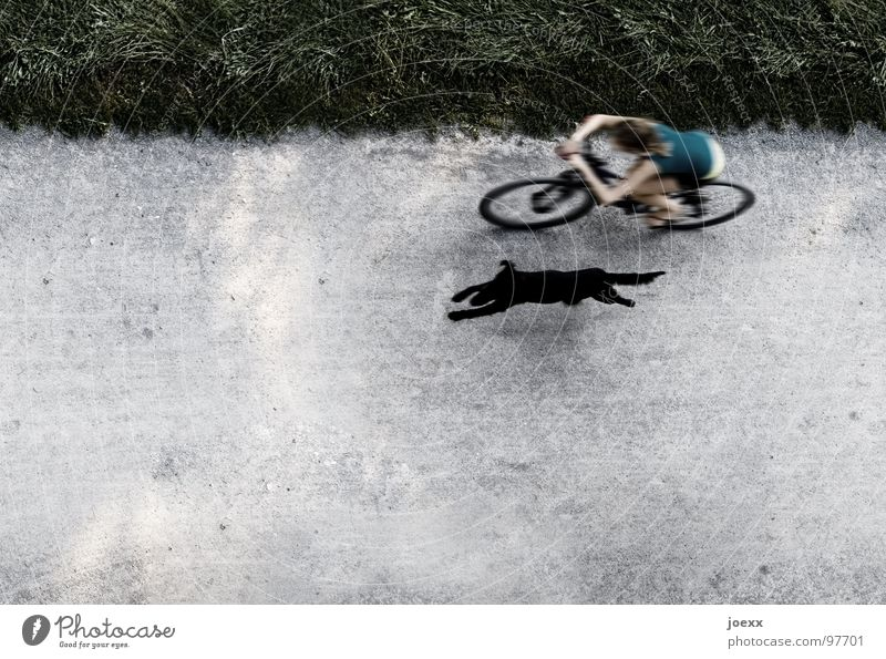Woman Dog Summer Relaxation Black Meadow Movement Grass Healthy Playing Contentment Bicycle Speed Driving Running Border