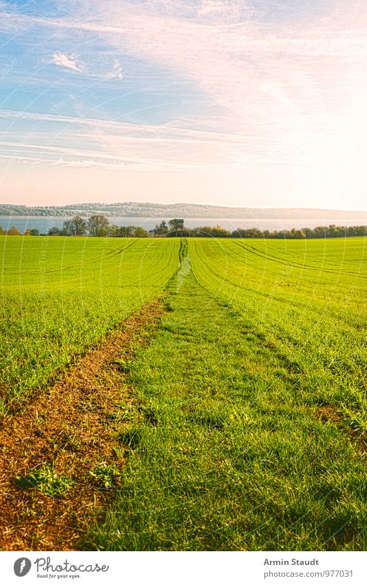 Field path to the lake Environment Nature Landscape Earth Sky Sun Spring Summer Beautiful weather Meadow Lake Mecklenburg-Western Pomerania Footpath
