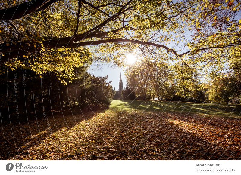 Victoria Park - Autumn Lifestyle Harmonious Calm Nature Landscape Sky Cloudless sky Sun Sunlight Beautiful weather Tree Autumn leaves Meadow Branch Berlin