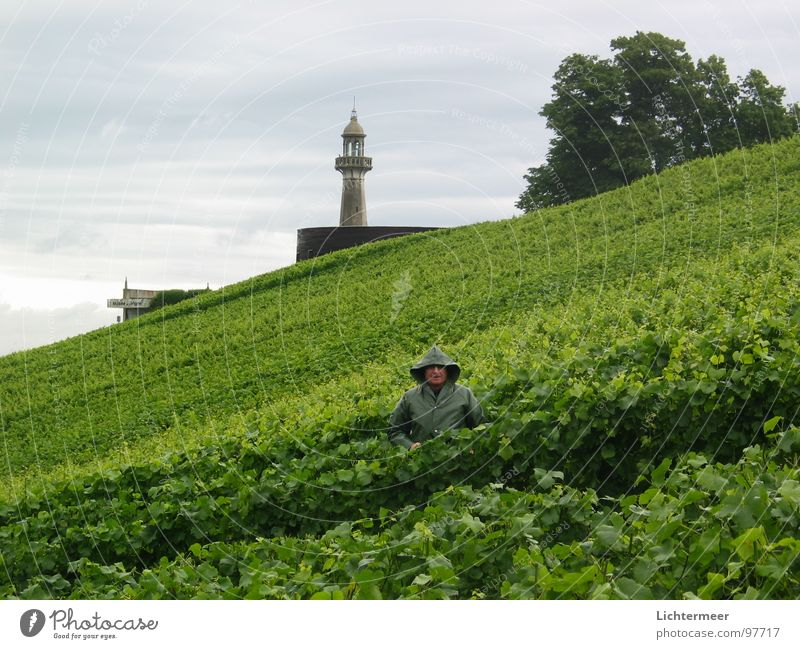 Rain Vine France Lighthouse Champagne Winegrower