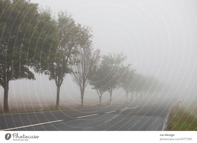 mist pattern Environment Nature Landscape Autumn Climate Bad weather Fog Tree Field Traffic infrastructure Road traffic Motoring Street Lanes & trails