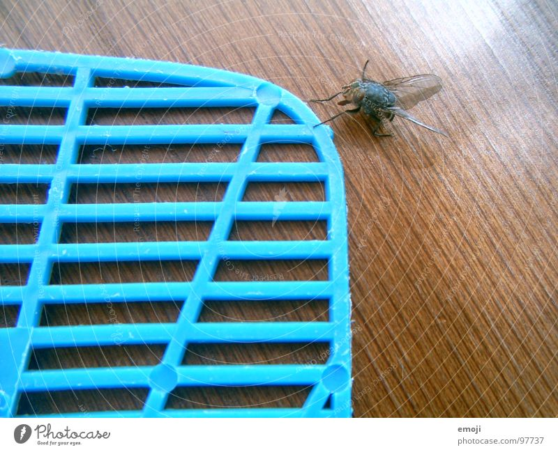 a fly comes waddling along. Chance Survive Life Live Funny Grid Testing & Control Fly Death dead fun Joy slap swatter Caution Blue Wing