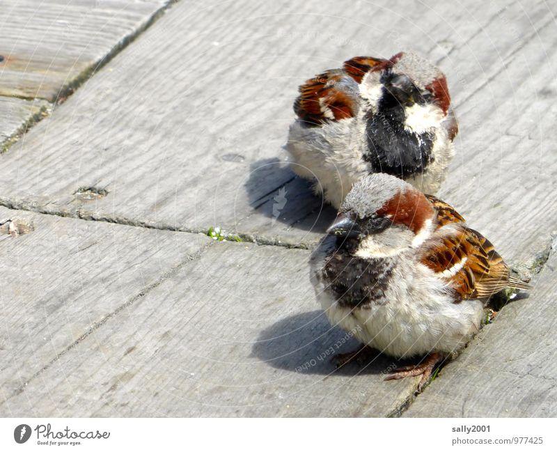 Extraordinary. Sweet and cheeky. Animal Bird Sparrow Passerine bird 2 Observe Feeding Wait Brash Beautiful Astute Curiosity Brown Self-confident Agreed
