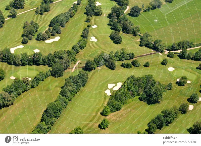 Extraordinary blotchy. Landscape Plant Tree Garden Park Meadow Green Golf Golf course Row of trees Lawn Grass surface Sand Sandbank Street Lanes & trails