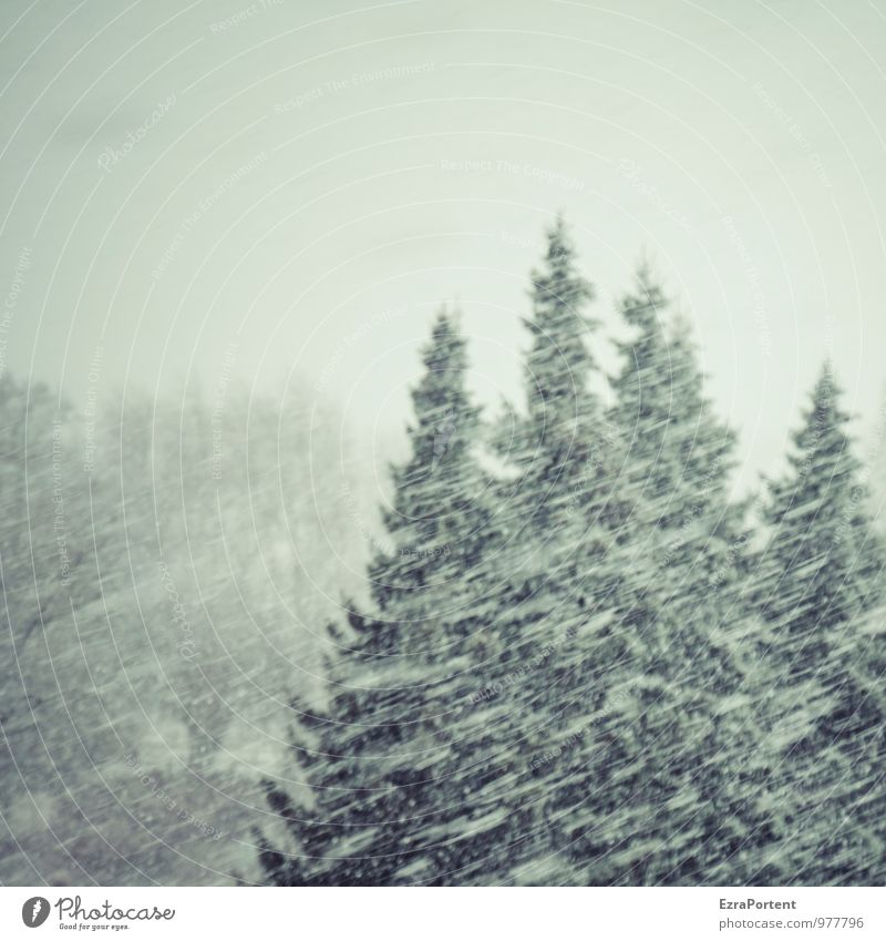 Sky Nature Vacation & Travel White Tree Landscape Winter Black Dark Forest Cold Environment Snow Gray Snowfall Weather