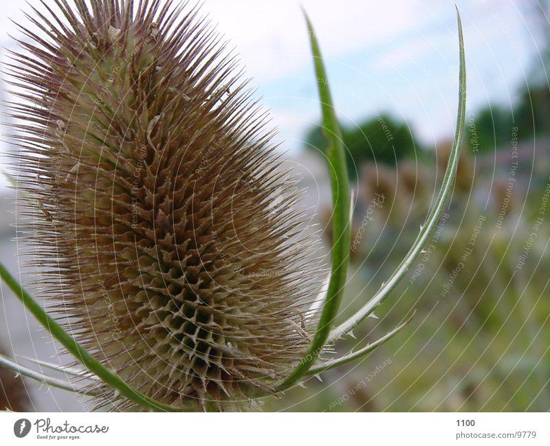 Plant Thorny