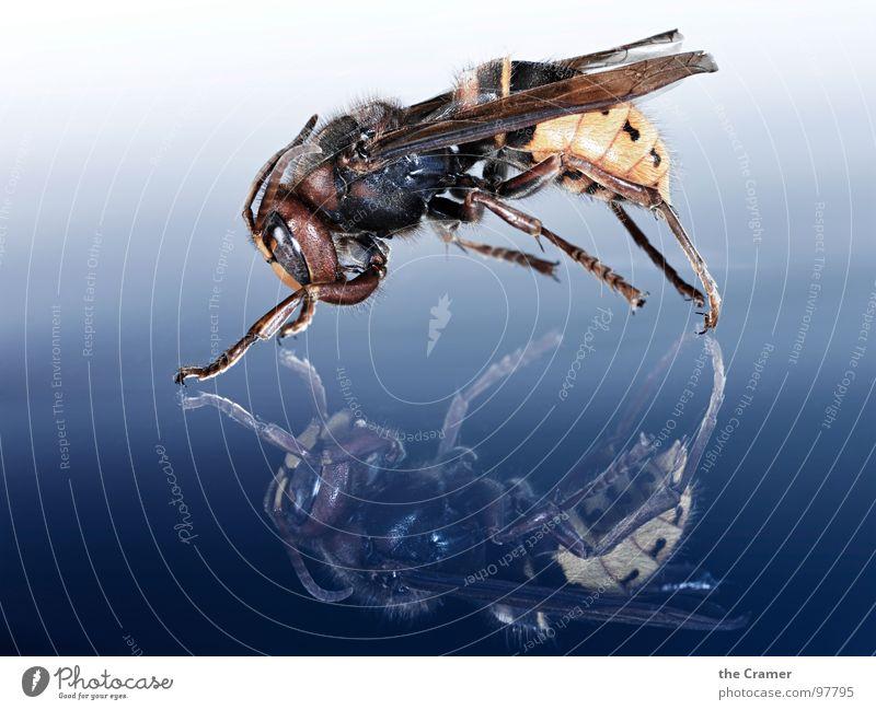 Blue Yellow Fear Wing Insect Respect Panic Progress Wasps Hornet F/A-18D Hornet