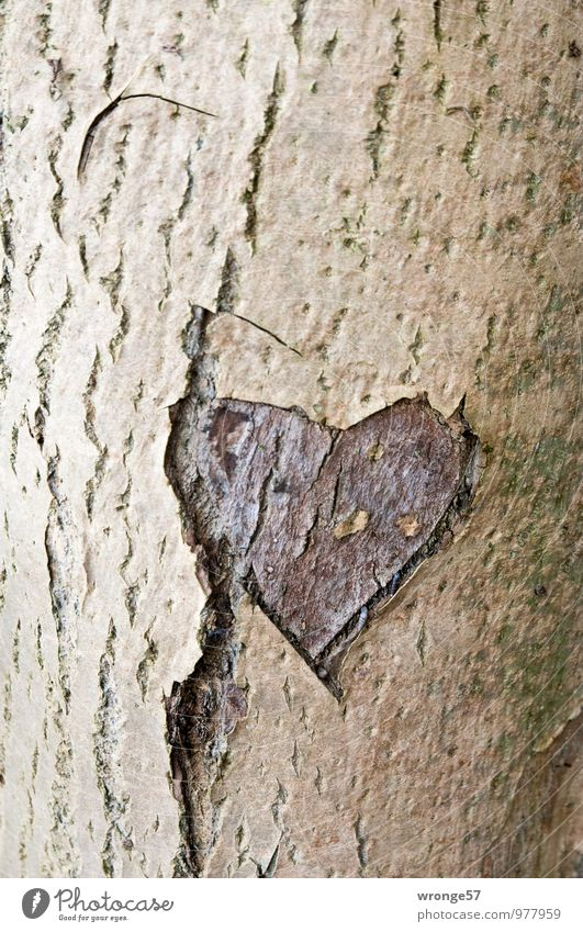 Old love Tree Deciduous tree Wood Sign Heart Brown Love Infatuation Loyalty Romance Heart-shaped Tree trunk Tree bark scoring Memory Colour photo Subdued colour
