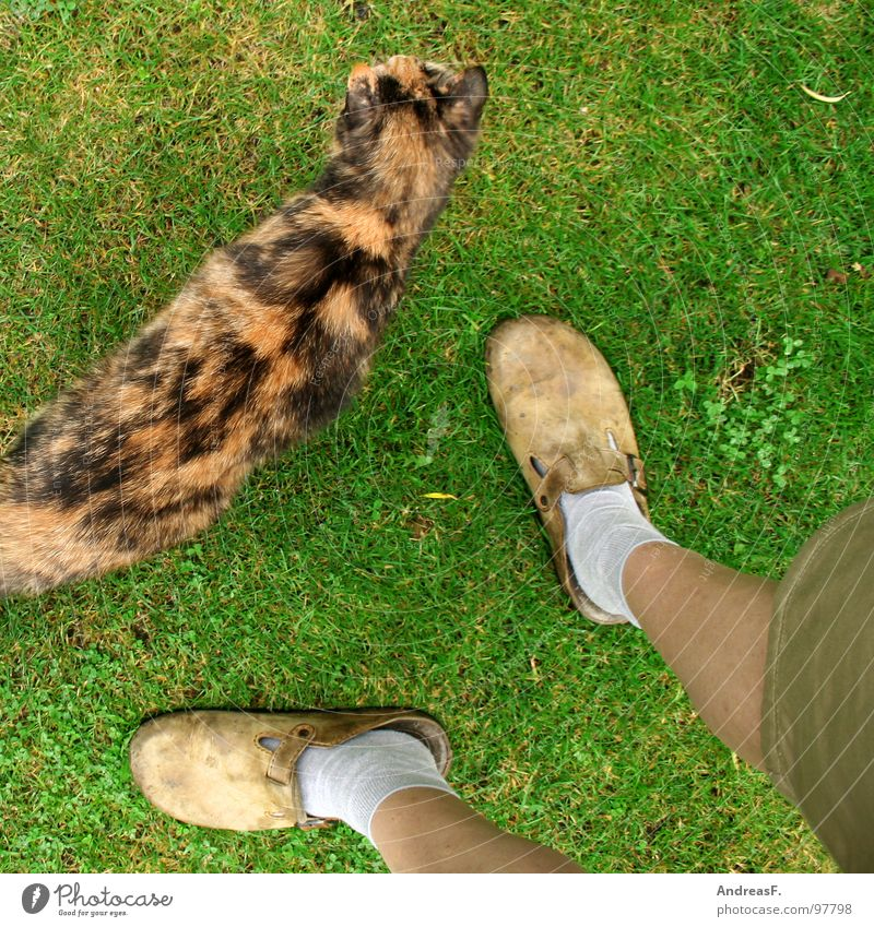 Green Vacation & Travel Relaxation Meadow Grass Garden Feet Cat Footwear Legs Perspective Lawn Stand Leisure and hobbies Stockings Mammal