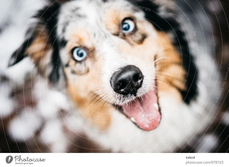 Dog Blue Beautiful White Animal Black Laughter Brown Snowfall Contentment Sit Smiling Near Animal face Brash Breathe