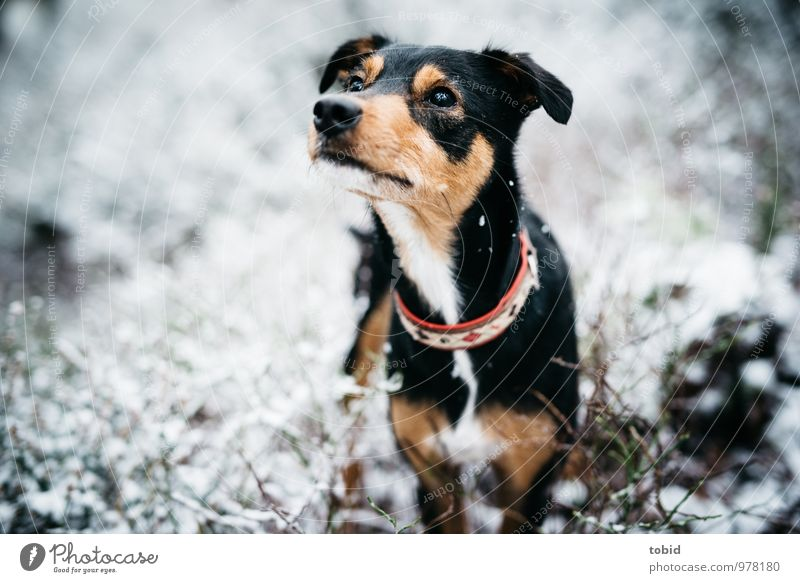 Dog Nature Beautiful White Animal Black Forest Eyes Grass Snow Gray Small Brown Weather Bushes Stand