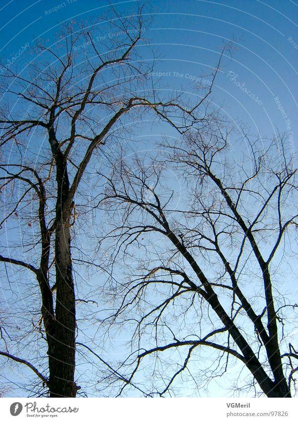 Nature Sky Tree Blue Landscape 2 Peace Branch Mysterious Beautiful weather Peaceful Impressive