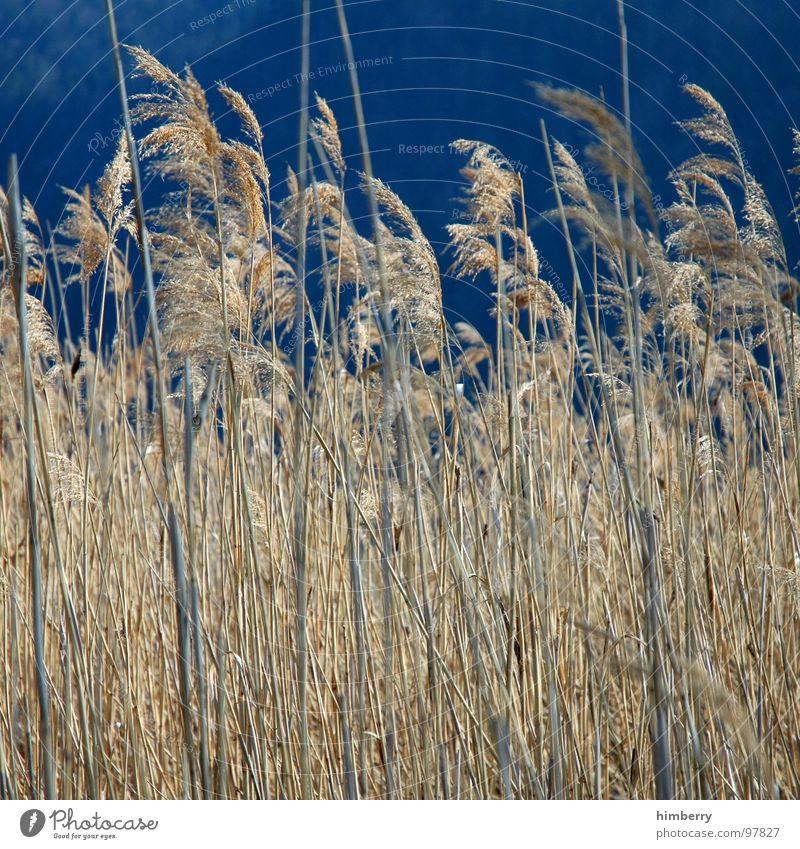 whispering wind Field Agriculture Autumn Sky Grain Nature Hiding place Landscape Plant