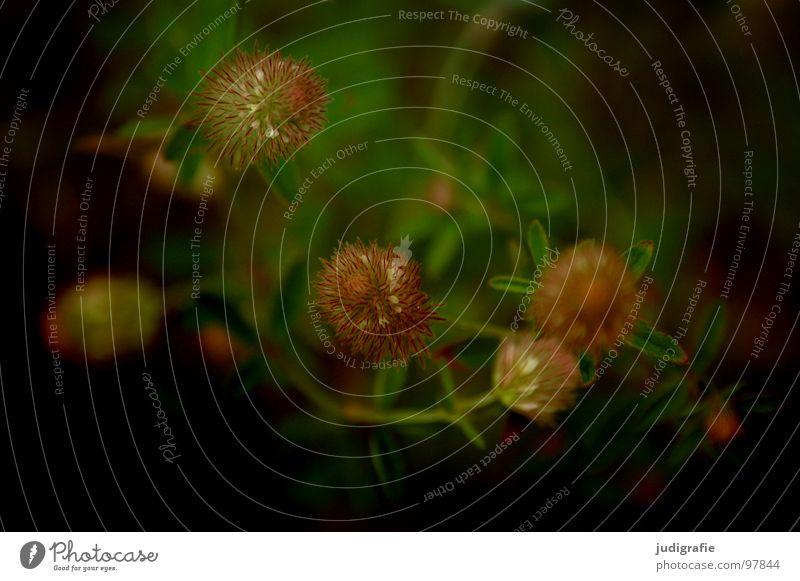 Nature Beautiful Flower Plant Summer Black Colour Meadow Blossom Brown Environment Growth Simple Stalk Wild animal Flourish