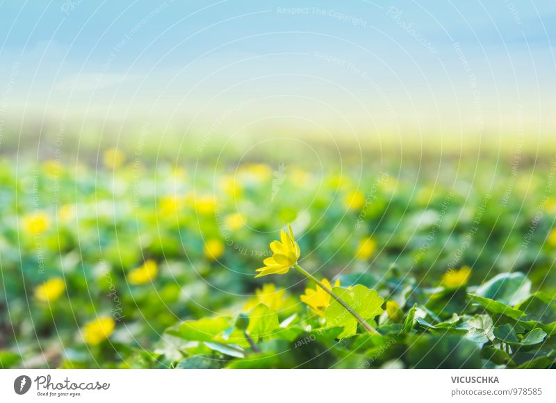 Sky Nature Summer Flower Landscape Environment Yellow Meadow Blossom Spring Style Garden Jump Horizon Park Field