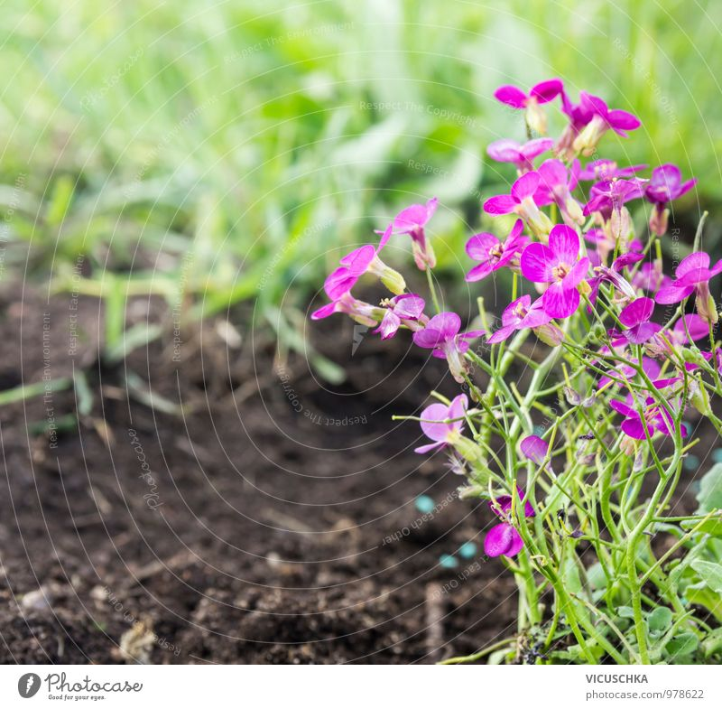 Nature Plant Summer Flower Grass Spring Style Garden Jump Pink Park Earth Design Beautiful weather Violet Flowerbed