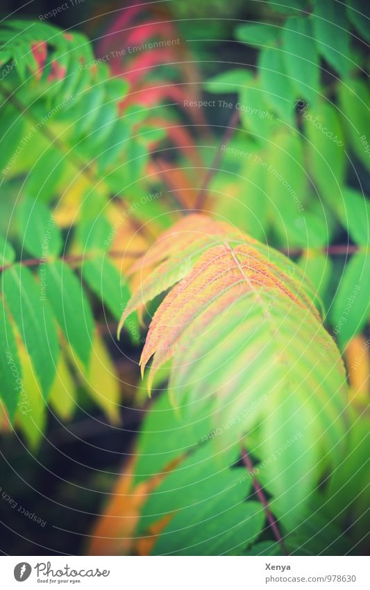 fern Environment Nature Plant Fern flaked Foliage plant green Deserted Day Shallow depth of field Colour photo Exterior shot Detail Blur Copy Space top