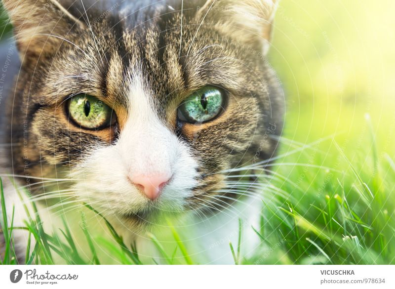 Cat Nature Beautiful Summer Animal Face Eyes Grass Spring Style Garden Pink Park Lifestyle Free Cute