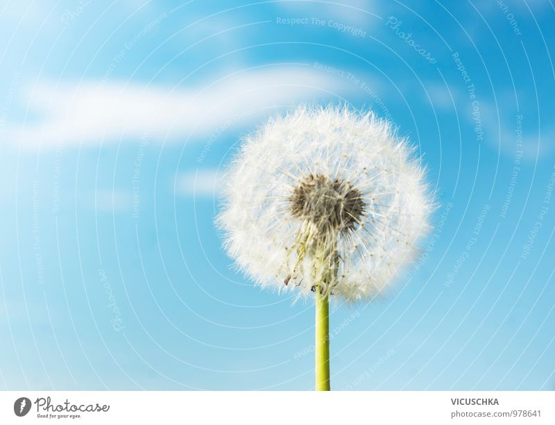 Sky Nature Plant Blue Heaven Summer White Environment Warmth Spring Meadow Background picture Garden Bright Jump Design