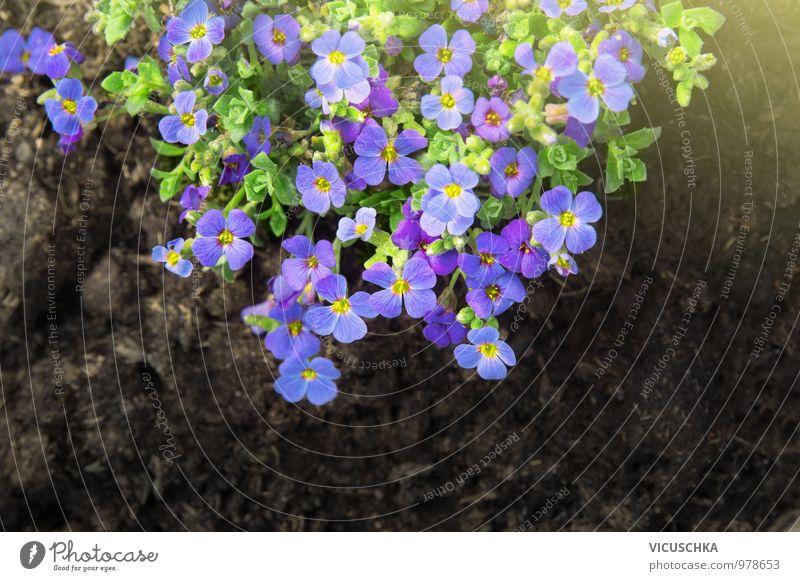 Nature Blue Plant Summer Sun Flower Leaf Blossom Spring Style Garden Park Leisure and hobbies Earth Decoration Design