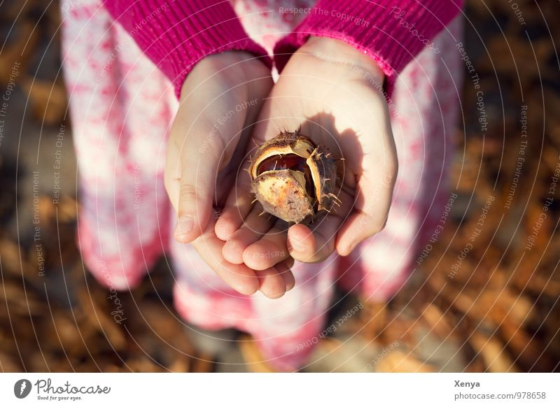 Human being Child Hand Autumn Brown Pink Park Infancy Gift To go for a walk 8 - 13 years Autumn leaves Autumnal Safety (feeling of) Chestnut Warm light
