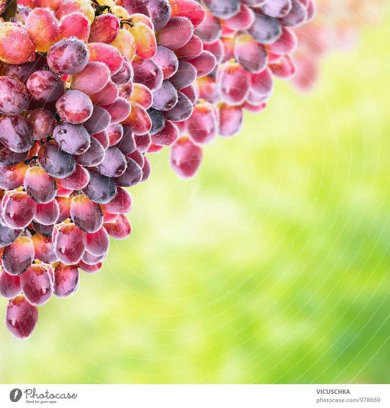Rose wine grapes on sunny foliage Food Fruit Nutrition Organic produce Vegetarian diet Diet Lifestyle Design Garden Nature Plant Sun Sunlight Spring Summer