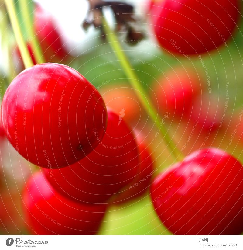 dessert Cherry Nutrition Delicious Red Hang Sweet Stalk Fruit Nature Mature Close-up Exterior shot Fruity Vegetarian diet Vegan diet Healthy Eating