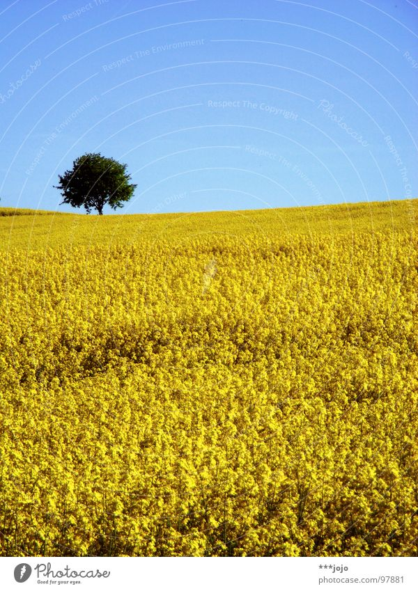 Nature Sky Tree Flower Blue Plant Yellow Blossom Spring Field Energy industry Blossoming Bee Agriculture Americas Oil
