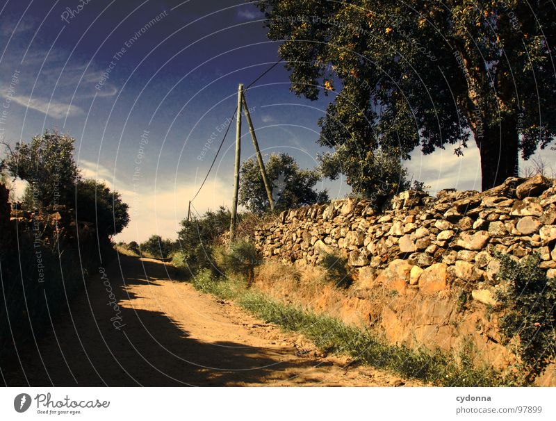 Utopian Dream Portugal Vacation & Travel Tourism Discover Foreign Summer Beautiful Curiosity Green Light Desire Loneliness Primordial Remote Meadow Olive grove