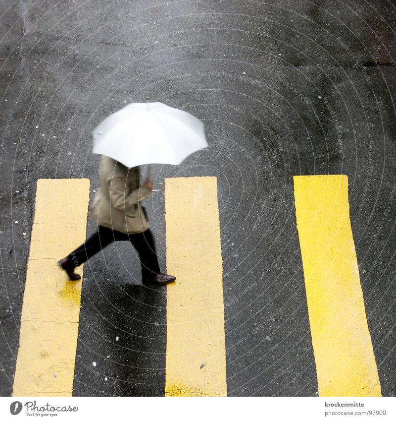 1, 2 or 3 Zebra crossing Pedestrian Yellow Asphalt Transport Town Going Traverse Concreted Tar Stripe Umbrella Storm Wet Rain Thunder and lightning Shadow