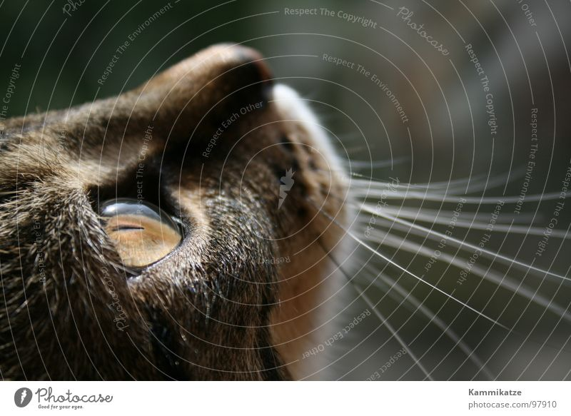 Cat Pelt Pet Mammal Domestic cat Snout Whisker Cat eyes