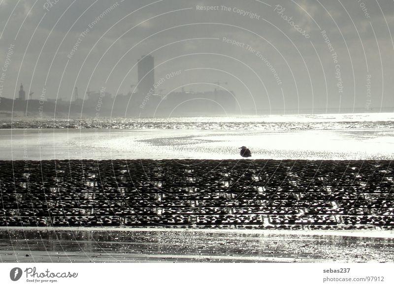 Water Sun Ocean Beach Calm Loneliness Freedom Rain Bird Coast Europe Skyline North Sea City High tide Low tide