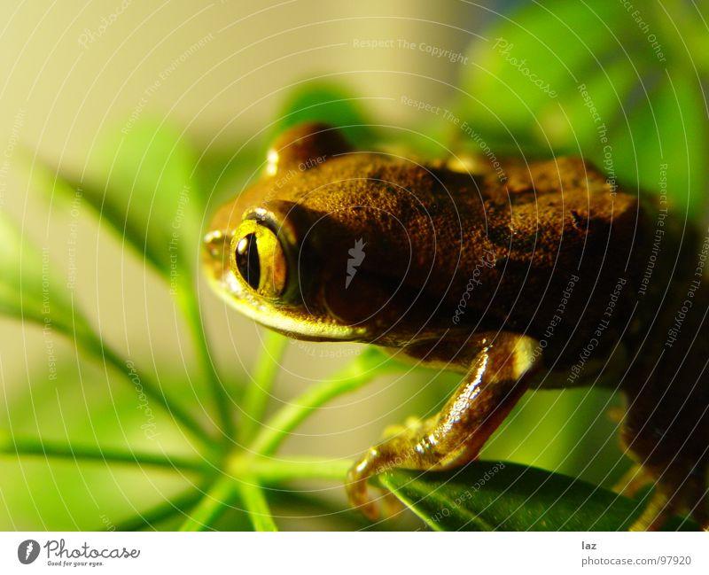 Nature Green Plant Animal Colour Black Eyes Spring Stone Jump Brown Orange Rain Gold Skin Search