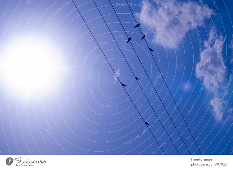 Sky Sun Clouds Warmth Bright Bird Rope Electricity Physics Hot Boredom Science & Research Swallow