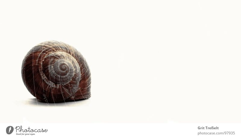 snail shell Snail Snail shell Slowly House (Residential Structure) Meadow Summer Grass Green Mucus Slimy Tracks Rain