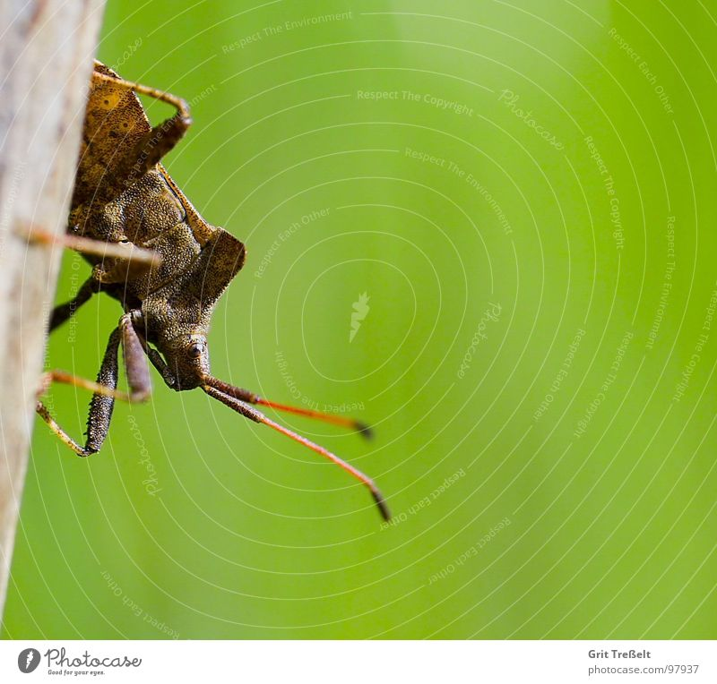 leather bug Bug Squash bug Green Grass Blade of grass Meadow Leather Insect Looking