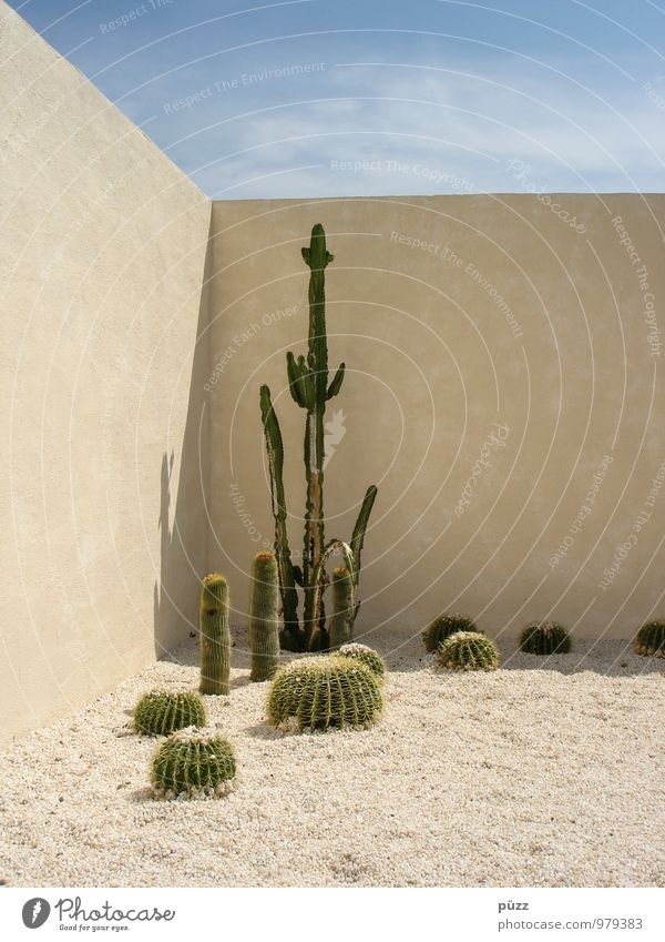Cactus Corner Vacation & Travel Summer Garden Nature Plant Sand Beautiful weather Foliage plant Exotic Stone Esthetic Hot Thorny Blue Yellow Green