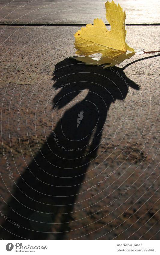 yellow-leaf Autumn Leaf Yellow Vine Vineyard Shadow