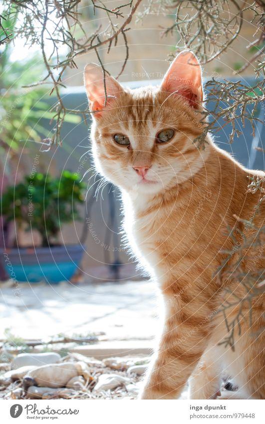Cat Nature Plant Animal Baby animal Garden Cute Pelt Pet Considerate Kitten